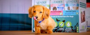 Small puppy enjoys Connolly's red mills leader nutrition food