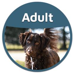 blog adult dog food button badge