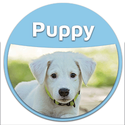 blog puppy dog food button badge BEST FOOD for puppies