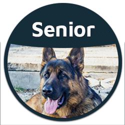 blog senior dog food button badge